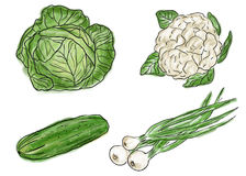 Types of fresh vegetables Royalty Free Stock Image