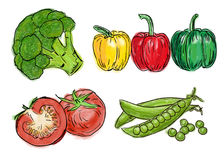 Types of fresh vegetables Stock Photography