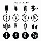 Types of grains, cereals icons - wheat, rye, barley, oats. Vector icons set of different grains  on white Stock Images