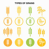 Types of grains, cereals icons - wheat, rye, barley, oats Stock Images