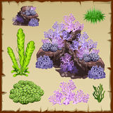 Types of green seaweed and purple corals Stock Photos