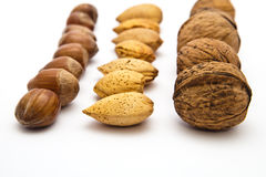 Types of nut. Rows of nuts on white Royalty Free Stock Photos