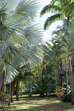 Types of Palms stock images