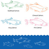 Types of Salmon Stock Photo