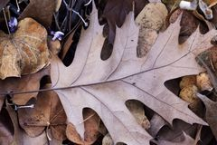 Types secs tombés d'Autumn Leaves On Ground Several Image stock
