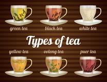 Types of tea in glass cups with tea leaves. Vector illustration. Vector tea set Stock Image
