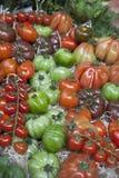 Types of Tomato Stock Image