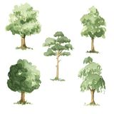 Types of trees. Royalty Free Stock Photography