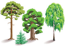 Types of trees Stock Image