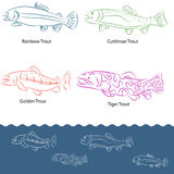 Types of Trout Stock Image