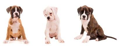 3 types van bokserpuppy Royalty-vrije Stock Afbeeldingen