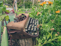 Typewriter in Garden. Rusty typewriter in garden with plants and vegetables Royalty Free Stock Images
