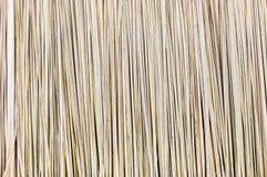 Typha elephantina dry background Stock Photography