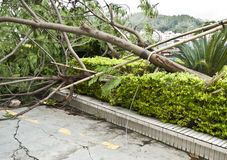 After typhoon Royalty Free Stock Photos