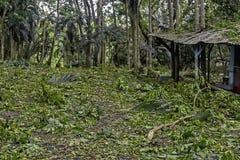 Typhoon Aftermath Stock Image