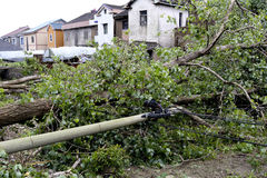 A typhoon blow down trees and telephone poles, waiting for repair Stock Image