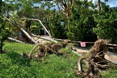 Tree collapse after typhoon stock photography