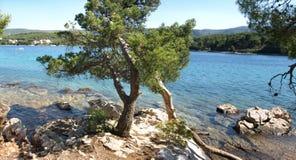 Typical adriatic seaside. Pine tree and rocky coastline of Hvar Island, Dalmatia, Croatia royalty free stock photos