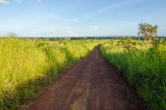 Typical African dirt and mud track with high elephant grass growing on either side, Gabon, Central Africa Stock Images