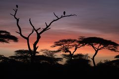 African landscape while in safari. Typical African landscape while in safari Stock Photos