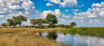 Typical African landscape, Bwabwata, Namibia. Typical african landscape with wild river in national park Bwabwata on Caprivi Strip, Namibia wilderness royalty free stock photography
