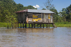 Typical Amazon Home (Amazonia) Stock Photography