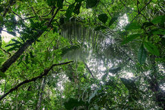 Tropical Plants, Amazonian Jungle Stock Image