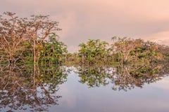 Typical Amazonian Vegetation In Ecuadorian Primary Jungle, Refle Stock Photography