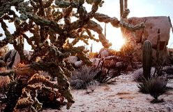 Typical of the American desert landscape. Typical desert landscape with cactus in U.S.A Royalty Free Stock Image