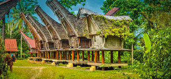 Typical ancestral houses in Sangalla. Large ancestral houses standing on four pillars with large boat-shaped roofs in Sangalla, Toraja region in southern Royalty Free Stock Images