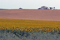 Typical Andalusian landscape with sunflowers and farm house. Fantastic afternoon colors in the scenic landscape in the South of Spain royalty free stock photography