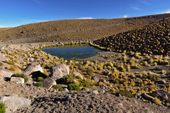 Typical andean desert vegetation near small lake under early mor Stock Photo