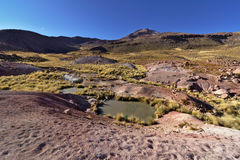 Typical andean desert vegetation near small lake under early mor Stock Images