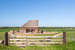 Typical animal barn in Holland Royalty Free Stock Photography