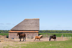 Typical animal barn in Holland Stock Photography