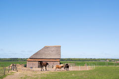 Typical animal barn in Holland Stock Photo