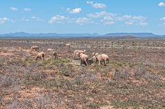 Typical arid Karoo landscape. Between Hanover and Richmond Royalty Free Stock Images
