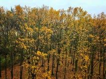 Typical autumn atmosphere Royalty Free Stock Photos