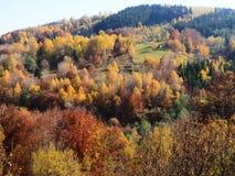 Autumn colours in Romania. Typical autumn colours at Doftana River Valley, Prahova County, Romania Royalty Free Stock Photo