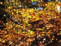 Autumn colours in Romania. Typical autumn colours foliage at Doftana River Valley, Prahova County, Romania Royalty Free Stock Image