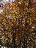 Autumn colours in Romania. Typical autumn colours foliage at Doftana River Valley, Prahova County, Romania Stock Images