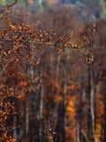 Autumn colours in Romania. Typical autumn colours foliage at Doftana River Valley, Prahova County, Romania Stock Image