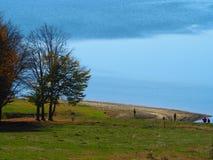 Autumn colours in Romania. Typical autumn colours at Paltinu lake, Doftana River Valley, Prahova County, Romania Royalty Free Stock Image