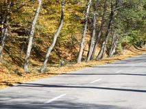 Autumn colours in Romania. Typical autumn colours on a road at Doftana River Valley, Prahova County, Romania Stock Photo