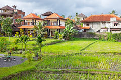 Typical balinese houses inbetween the rice fields in Bali Indone Stock Photos