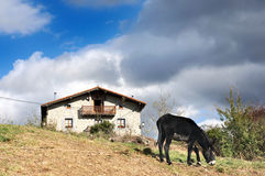 Typical basque country house with donkey Royalty Free Stock Image
