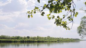 Typical belorussian landscape. Typical belorussian nature in spring: blue sky, river, brunches with green leaves stock video footage