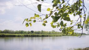 Typical belorussian landscape. Typical belorussian nature in spring: blue sky, river, brunches with green leaves stock video