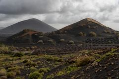 Vineyard fields volcano landscape in Lanzarote. Typical black vineyards, stone walls, lava fields - Canary Islands stock images