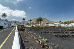 Typical Canarian village in Lanzarote, Canary Islands. Spain. Vineyards ,Palm tree royalty free stock photography